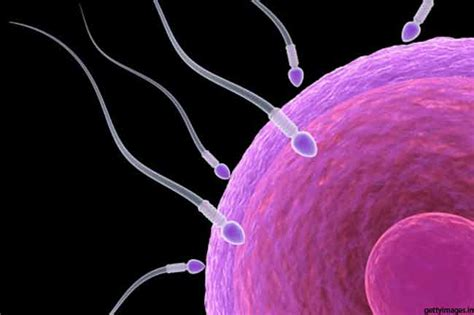 improve  sperm quality