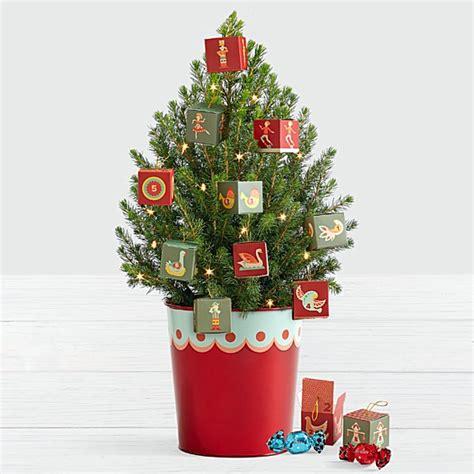 mini christmas tree live real mini tree small real trees live potted
