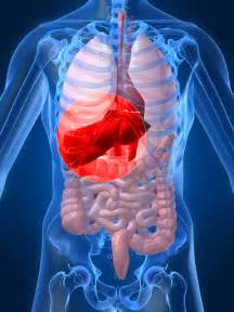 hepatitis hepatitis plural hepatitides is a medical condition defined ... Hepatitis