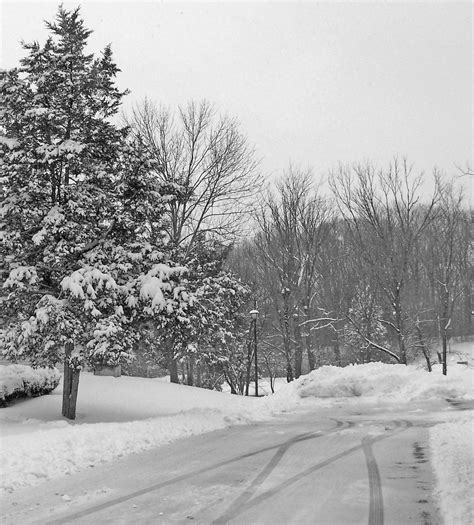 free images tree nature forest outdoor branch snow