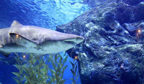 Sea Life Bangkok Ocean World Ticket Trazy Your Travel