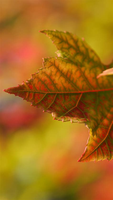 Autumn Wallpapers Iphone Xr by Autumn Leaf Fall Iphone Wallpaper Idrop News