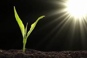 Schmucklilie überwintern Gelbe Blätter : schmucklilie pflanzen pflegen berwintern und mehr ~ Eleganceandgraceweddings.com Haus und Dekorationen