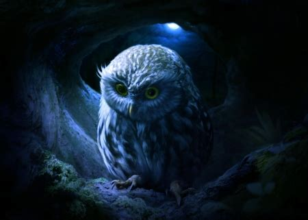 owl fantasy abstract background wallpapers