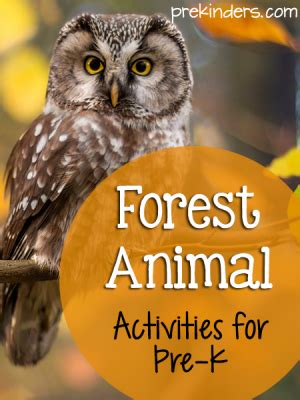 forest activities  lesson plans  pre   preschool