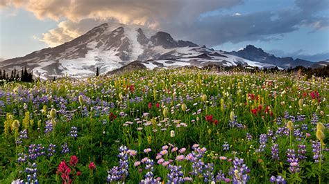 wildflowers rainier spring national park mount flowers washington parks state wild banner dreaming spots nature them