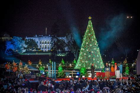 tree lighting at the white house rainforest