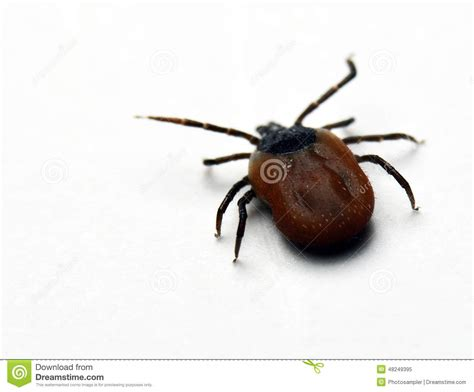 Tick Royalty-free Stock Photography