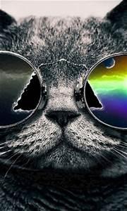 Cool Cat Wallpapers - WallpaperSafari