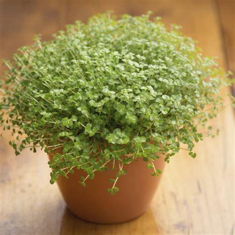 plante interieur sans lumiere plantes d int 233 rieur sans lumi 232 re liste ooreka
