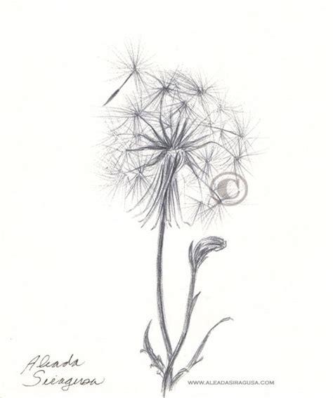 dandelion botanical drawing tattoo planning