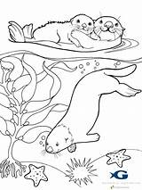 Otter Coloring Sea Pages Otters Google sketch template