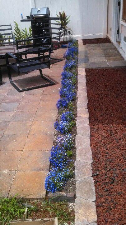 patio border plants patio borders plants are lobelia patio ideas pinterest border plants plants and gardens