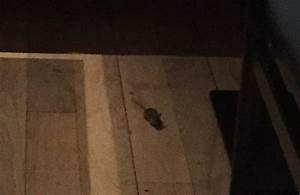 Diners spot mouse running across the floor of gordon for Mice in between floors