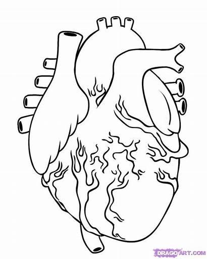 Random Coloring Pages Drawing Human Heart