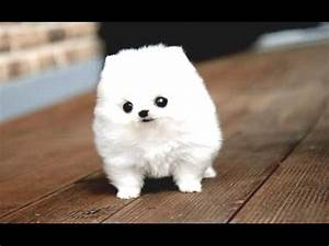 Funny Puppies And Cute Puppy Videos Compilation 2016 [BEST ...  Cutest