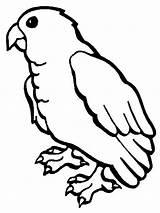 Parrot Coloring Pages Colornimbus sketch template