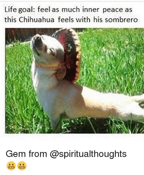 Inner Peace Meme - life goal feel as much inner peace as this chihuahua feels with his sombrero gem from