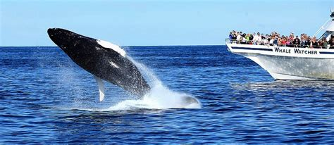 Whale Watching Breakfast Cruise  Cabo Shuttle Services