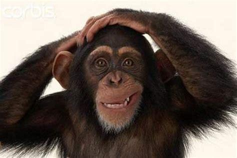tiene luis fonsi  de mono