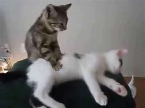 baixar de videos engracados de gatos whatsapp gratis
