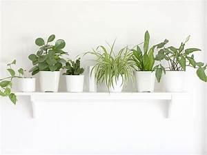 Kleines Gewächshaus Ikea : aentschies blog pflanzen und katzen kein problem ~ Michelbontemps.com Haus und Dekorationen