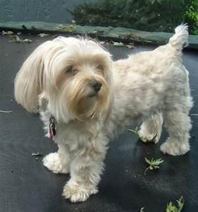 Dog Breed Info Site ,all small breeds,pure breeds,hybrid ...