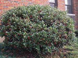 Brookland In Photos - We Got Lots Of Holly! - The ...