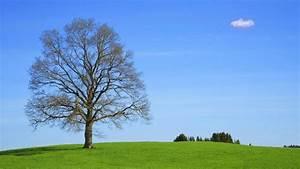 Bilder Vom Himmel : warum ist der himmel blau physik einfach erkl rt ~ Buech-reservation.com Haus und Dekorationen
