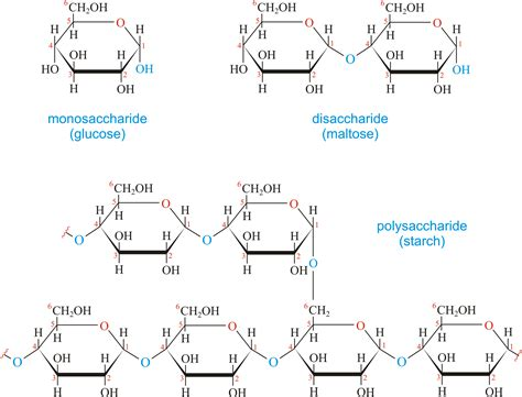 carbohydrate chemistry glossary carbohydrates hydrolysis sugars acetal periodni glycosidic bonds quality dictionary