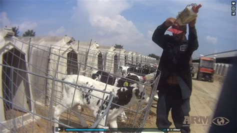 animal rights group releases longer video showing farm abuse