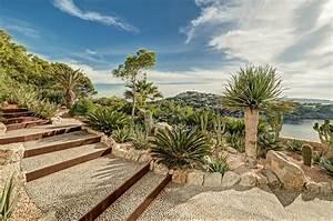 Ferienwohnung Auf Mallorca Kaufen : gro en baum palme pflanze mallorca ibiza balearen ~ Michelbontemps.com Haus und Dekorationen