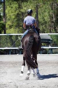 Dr. Hilary Clayton's Seminal Study Shows Increased Rider ...