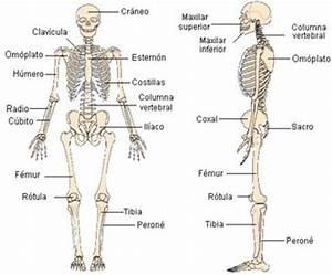 Mi Escuela Divertida: Láminas sobre los Sistemas del Cuerpo Humano