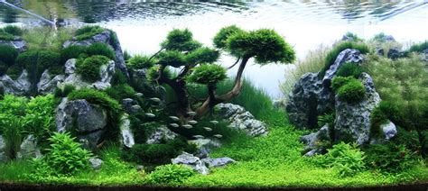 Japanese Aquascape by Science Journal Takashi Amano Aquascaping Can Be