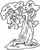 Coloring Climbing Tree 05kb 864px sketch template