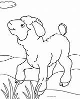 Sheep Coloring Pages Face Printable Cool2bkids sketch template