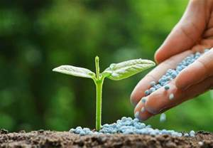 ti plant fertilizantes y abonos para el desarrollo de las plantas