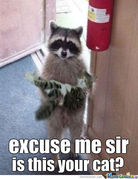 Raccoon Memes Best Collection Of Funny Raccoon Pictures
