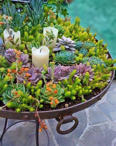 Vertical Succulent Garden Indoor by 1000 Ideas About Indoor Succulents On Indoor