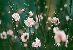 flower-flowers-photography-summer-Favim.com-501532 ...