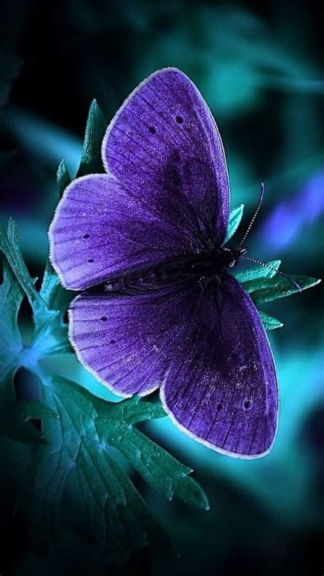 Customize your desktop, mobile phone and tablet with our wide variety of cool and interesting flower wallpapers in just a few clicks! Cool Phone Wallpapers with Blue Butterfly in Dark - HD Wallpapers   Wallpapers Download   High ...