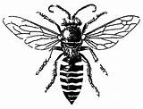 Bee Honey Tattoo sketch template
