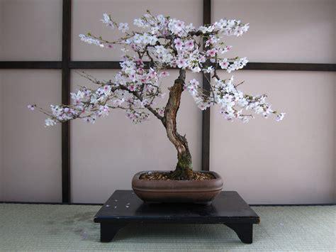 bonsai cultivation  haiku   tree world