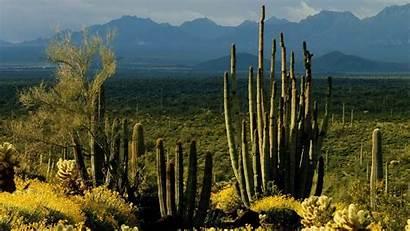 Arizona Landscape Cactus Monument Wallpapers Usa Monuments