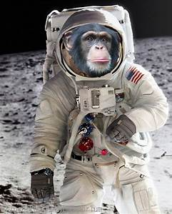 Monkey on the Moon Art Print 8 x 10 - First Chimp in Space ...