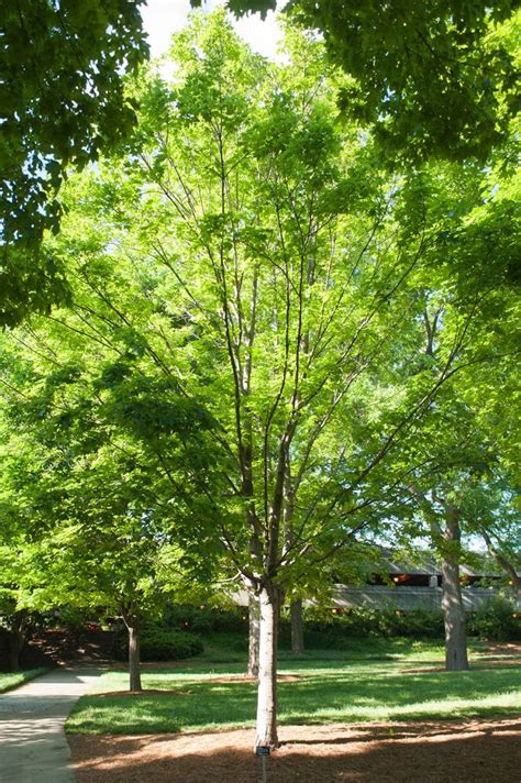technology  trees