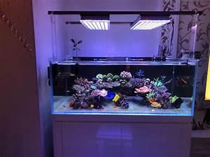 Aquarium Led Beleuchtung : befestigungswinkel befestigungswinkel f r die atlantik led beleuchtung aquarium led ~ Frokenaadalensverden.com Haus und Dekorationen