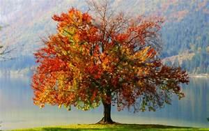 Autumn Tree Painting - Wallpaper #32642