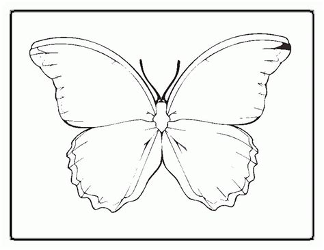 Coloring Outlines by Butterfly Outline Printable Coloring Home